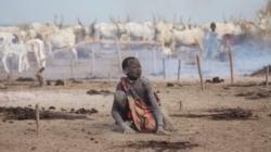 Apocalipsa porcului: foametea planetară bate la ușă