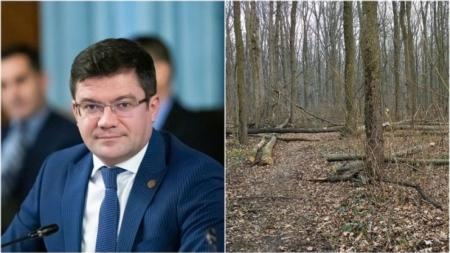 Pădurile Băneasa, Snagov și Andronache, în zona de protecție. Tăierile de lemn, interzise