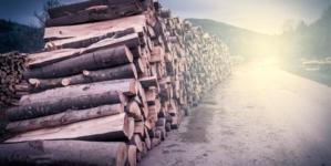 Anchetă: Schweighofer e beneficiarul lemnului furat