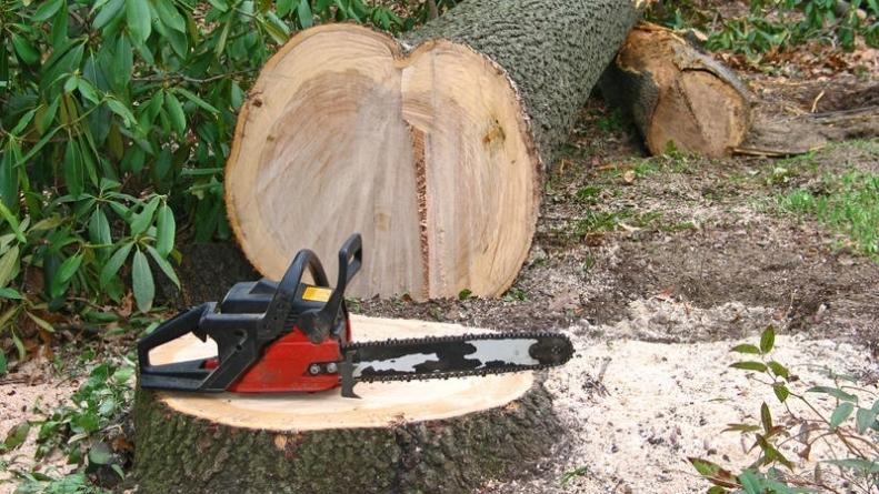 Maramureșenii îi încaieră pe hoții de lemn