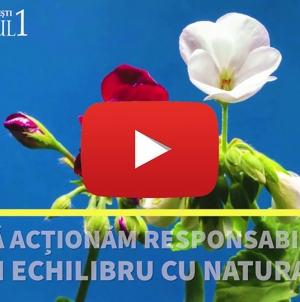 Primăria Sector 1- Sisteme naturale în interacțiune