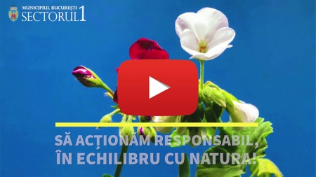 Primăria Sector 1- Acționăm responsabil, în echilibru cu natura