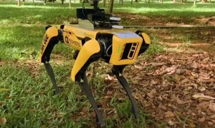 Roboții impun distanțarea socială în parc
